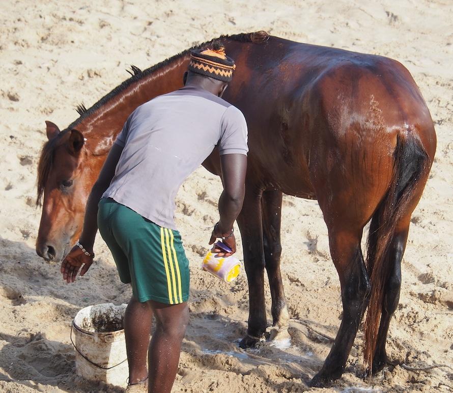 cheval de Ngore