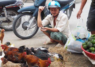 marché de coqs et de poulets
