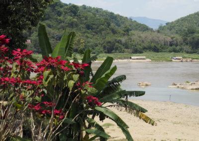 végétation au bord du Mékong