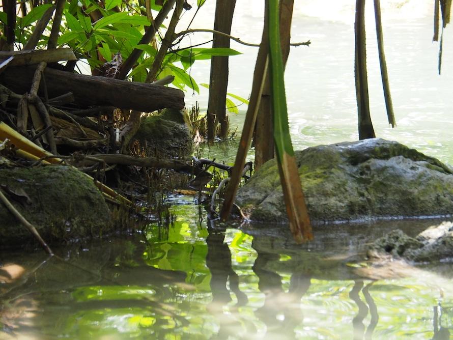 Dans la jungle d'Erawan, la cascade