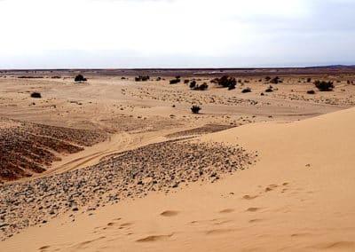 début du sahara