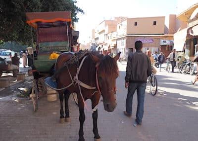 les calèches du marché berbère de Taroudant