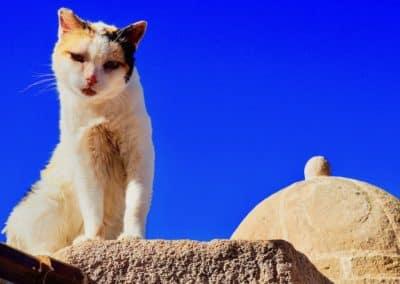chat sur les remparts de Essaouira