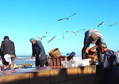 des pêcheurs à Essaouira