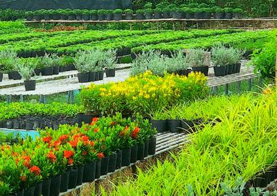 culture de fleurs dans la région de Sa Dec