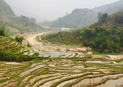 rizières en terrasses dans la région de Sapa