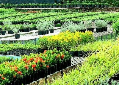 fleurs dans la région de Sa Dec