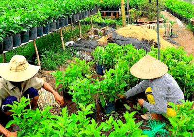 horticulteurs dans la région de Sa Dec