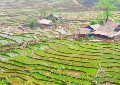 rizières autour de Sapa