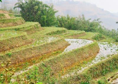 rizières en terrasses de la région de Sapa