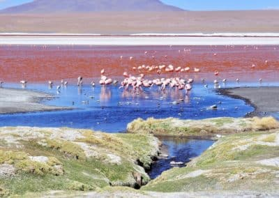 lagune colorée du Sud Lipez