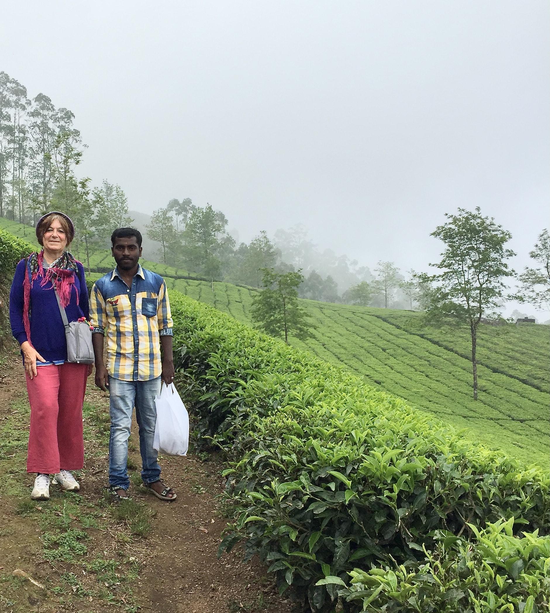 dans une plantation de thé à Munnar